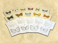 World War II/Holocaust - Butterfly Starter Kit (1939-1945)